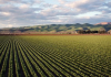 BrandiT Farmstruck Global